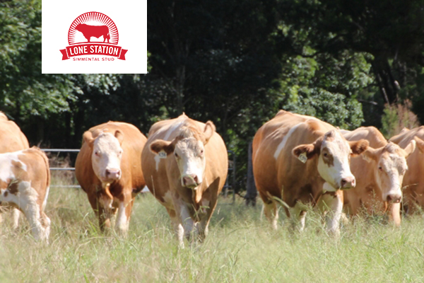 Lone Station Simmentals  Case Study